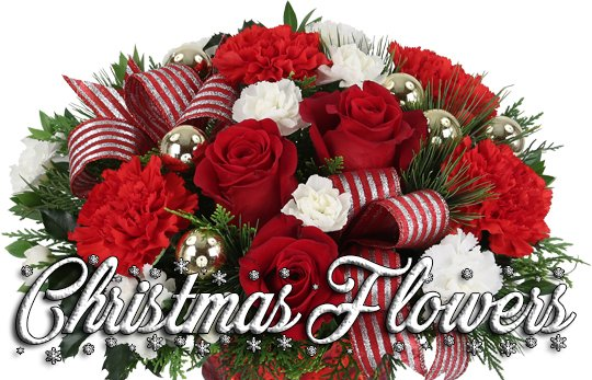 premium christmas flowers · canada flowers.ca, Natural flower