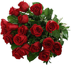 18 Luxury Red Roses