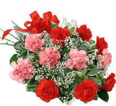 Pink & Red Carnations