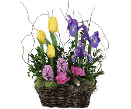 Spring Bloom Basket