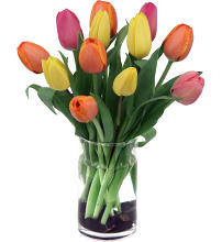 Fresh Day Tulips