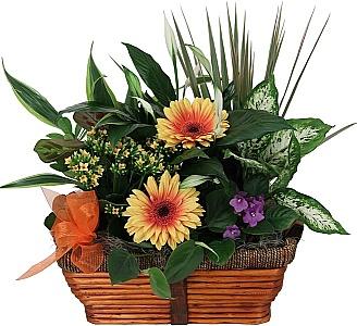 Indoor Plants · Canada Flowers ca