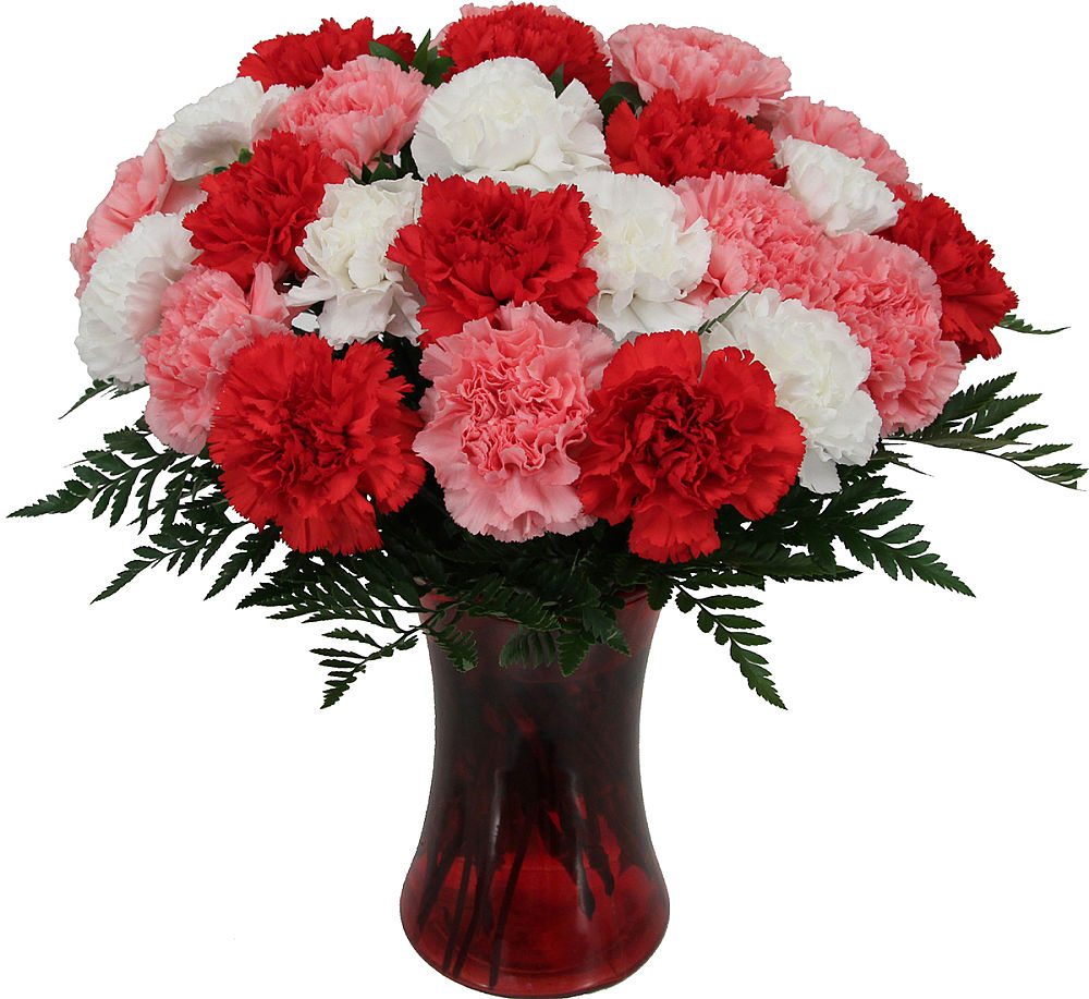 Two Dozen Mixed Carnations 183 Carnations 183 Canada Flowers