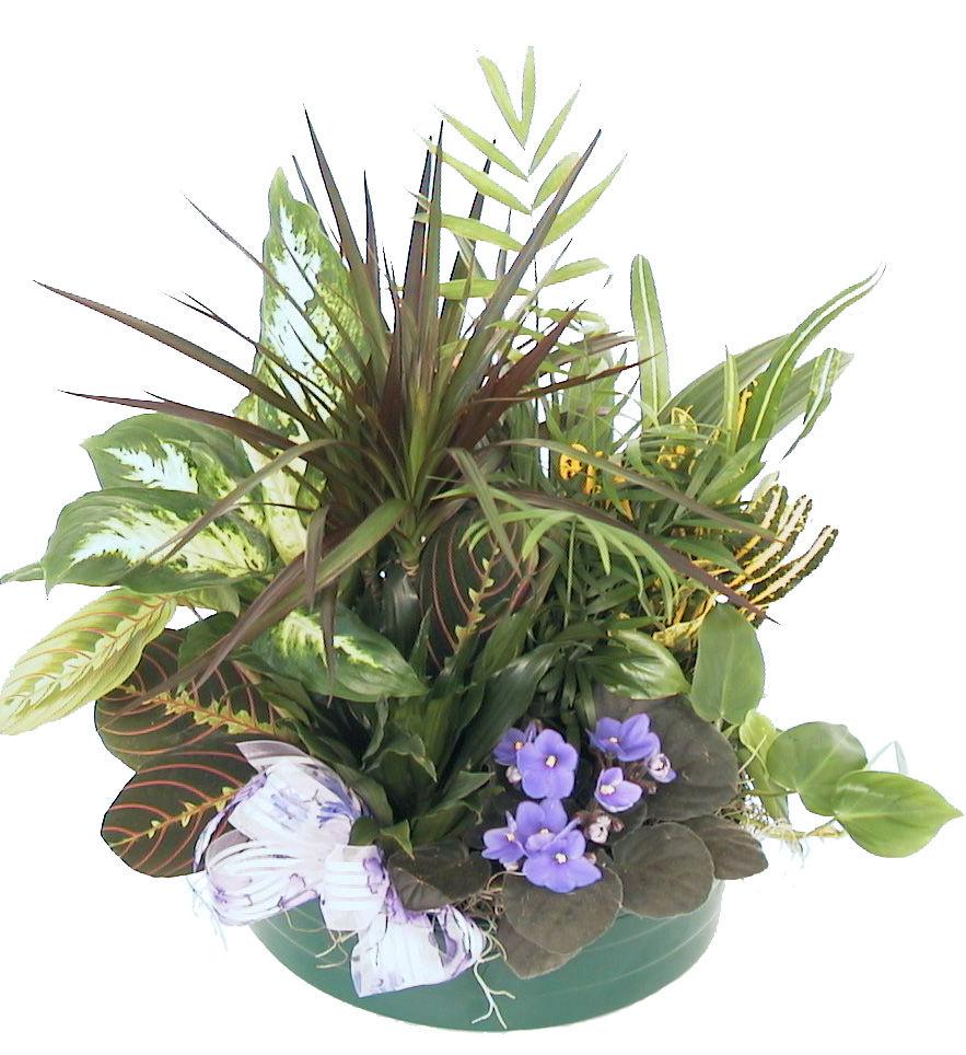 Serenity Dish Garden Sympathy Plants Canada Flowersca