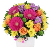 Send Birthday Flowers same day across Canada with Canada Flowers, Canada's National Florist. Prices in Canadian dollars. Order by 2 pm EDT for same day birthday flower delivery to most towns and cities across Canada.
