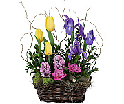 Welcome to Canada Flowers 2019 Easter Flowers catalogue, featuring beautiful flowers for delivery in Canada for the Easter Holiday, and the Spring season. Please note that Easter flower arrangement deliveries are not available on Good Friday or Easter Sunday. Happy Easter from Canada Flowers.