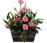 Plants, flowering plants, planter baskets and tropical plants delivered in Canada same day with Canada Flowers. Plants are a wonderful