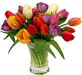 Welcome to our 2018 catalogue of Spring Flowers, featuring a bevy of colourful tulips, and exciting new floral arrangements and bouquets just for the spring season! Celebrate any happy occasion in Canada with our seasonal Spring arrangements, or give fresh Spring bouquets 'just because'. These spring flowers are sure to brighten anyone's day -- with promises of new life and new warmth, too!