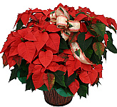Shop online from our best selling and most popular Christmas flowers, centerpieces, poinsettias and flower arrangements. Same day delivery available to Canada.