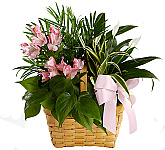FTD® Plants, flowering plants, planter baskets and tropical plants delivered in Canada same day with Canada Flowers. Plants are a wonderful