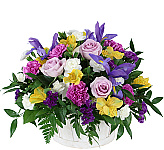 Welcome to our 2019 catalogue of Spring Flowers, featuring a bevy of colourful tulips, and exciting new floral arrangements and bouquets just for the spring season! Celebrate any happy occasion in Canada with our seasonal Spring arrangements, or give fresh Spring bouquets 'just because'. These spring flowers are sure to brighten anyone's day -- with promises of new life and new warmth, too!
