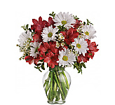 Our Teleflora Budget Flowers catalogue features a variety of fresh arrangements and bouquets all optimally priced for the highest savings! Delivery available to Canada by local Teleflora florists. More low priced flowers to send can be found at our original Budget Flowers catalogue. At these prices, it's okay to order more than one!