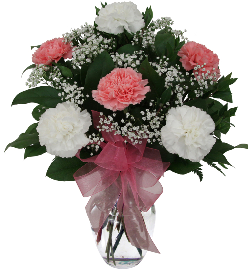 Six White & Pink Carnations