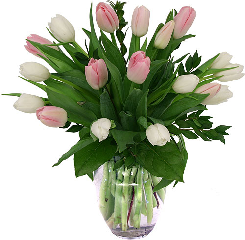 Easter Flowers Pink White Tulips Es16aa Canada Flowers