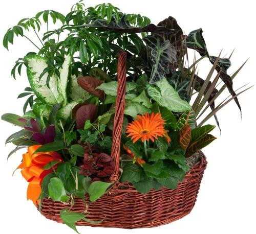 Be Well Plant Basket