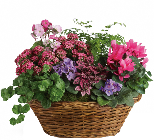 Teleflora Simply Chic Planter Basket