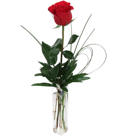Single Red Rose Lv23aa 183 Love Amp Romance Flowers 183 Canada