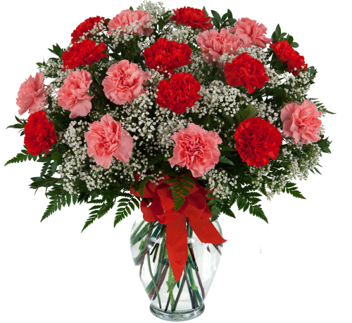 Beautiful Carnations Va23aa 183 Valentine S Day Flowers