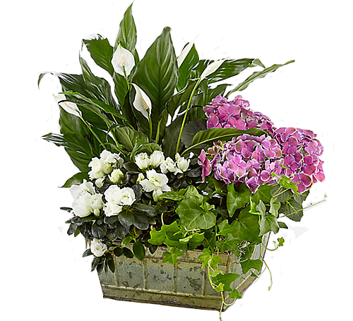 FTD® Be Inspired Blooming Basket