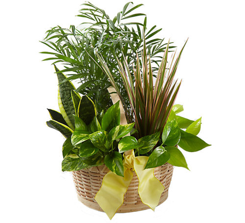 FTD® French Garden Basket