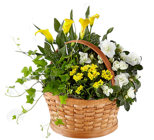 FTD® Sunny Side of the Street Blooming Basket