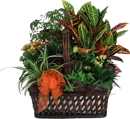 indoor-green-plants Long Lasting House Plants on portable house plants, cool looking house plants, colorful house plants, non-toxic house plants, inexpensive house plants, hypoallergenic house plants, compact house plants, refreshing house plants, night blooming house plants, rugged house plants, robust house plants, soothing house plants, elegant house plants, small house plants, organic house plants, lightweight house plants, weather proof house plants, fragrant house plants, strong house plants, easy to maintain house plants,