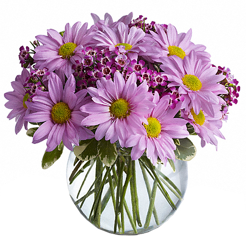 Teleflora's Delightfully Daisy Bouquet