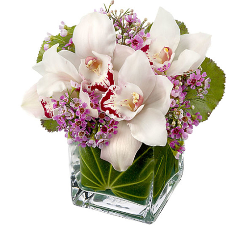 Teleflora's Lovely Orchids Bouquet