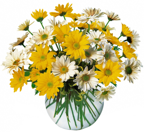Teleflora's Dashing Daisies