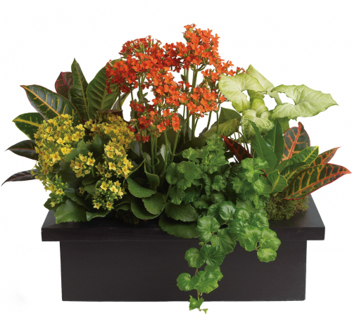Teleflora's Stylish Plant Assortment