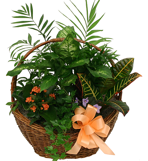 UK Flower Delivery · Planter Basket #GBA13AA · Canada Flowers
