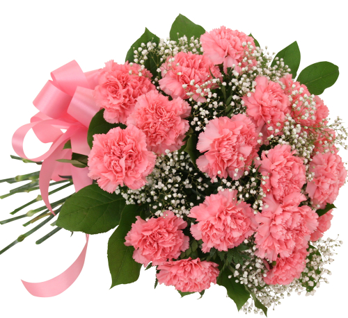 18 Pink Carnations